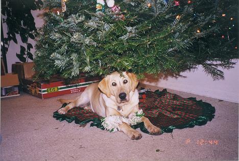 Cory on Christmas