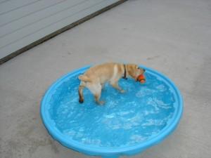 Kaydee in the pool